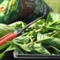 Workshop planten vermeerderen