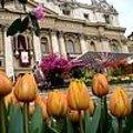 Paasmis met Nederlandse bloemen