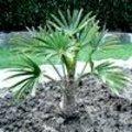 Exotische planten uit winterrust