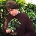 Coffea charrieriana als nieuwe koffiesoort in de 'wereld top 10 van nieuwe soorten 2009'
