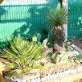 Onderhoudstips voor uw exotische planten