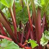 Rabarber telen: eigenschappen, oogsten, verzorging, vermeerderen,...