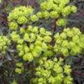 Voorjaarsbloeiende planten bloeien vaak met gele bloemen