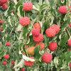 Enkele tuintips in september voor moestuin, siertuin en vijver