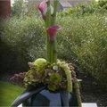 Stijlvol herfststuk maken met verschillende soorten Amaranthus, sierfruit, hortensia,...