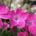 Geurende bloemen en planten