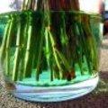 Boeket in groen water