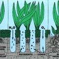 Gazon beluchten