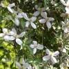 De schoonheid van klimplanten