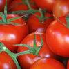 Tomaten opkweken en tomaten neusrot bestrijden