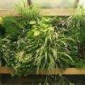 Verticaal tuinieren opbouw