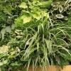 Een verticale tuin of groene wand onderhouden