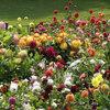 Nu planten in de tuin: zomerbloeiende bloembollen