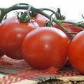 Alles over tomaten