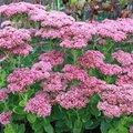 Planten die bloeien in oktober
