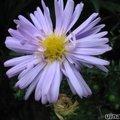 Planten die bloeien in november