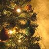 Een den of een spar? Kies een kerstboom