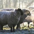 Tuintip -  Winterklussen bij lentetemperaturen