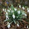 Meest voorkomende planten die bloeien in de maand januari