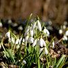 Tuintip -  Nu al lente...of toch net niet?