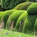Buxus & verzorging