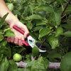De zomersnoei bij pitfruit