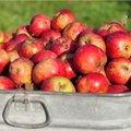 Fruit plukken en bewaren