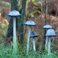 Foto's van paddenstoelen in de herfst