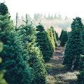 Kerstboom overhouden