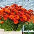 Duurzame snijbloemen