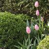 Buxus de groene tuintopper van april