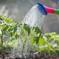 Tuin watergeven