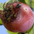 HELP: Een wespensteek