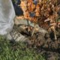 Planten in het najaar