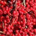 Antioxidanten voor tuinvogels