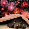 Vuurwerk – hou rekening met de dieren!