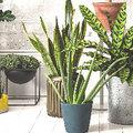 8 handige tips voor gezonde kamerplanten
