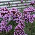 Bloemen voor vlinders