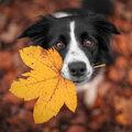 Hoe ontstaan herfstkleuren?