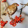 Ideeën om vogels te lokken naar jouw tuin