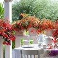 Stress te lijf met tuinieren