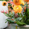 Zomerbloembollen planten