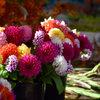 De tuin in augustus: snoeien en oogsten