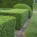 Een strakke groene haag