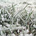 Het gazon voorbereiden voor de winter