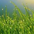 Gazon zaaien: verschillende grassoorten