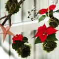 Kerst zonder boom