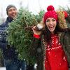 Kies de perfecte kerstboom