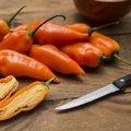 Kiezen: Paprika's en pepers