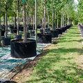 Volwassen bomen kopen